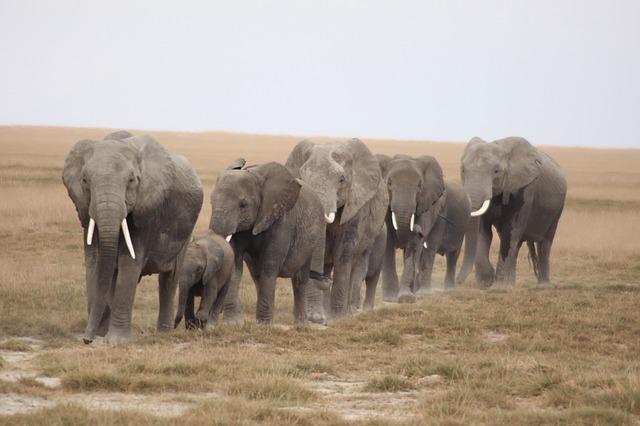 herd-of-elephants-1570649_640